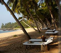 wella_11_beach-loungers_alb[1]