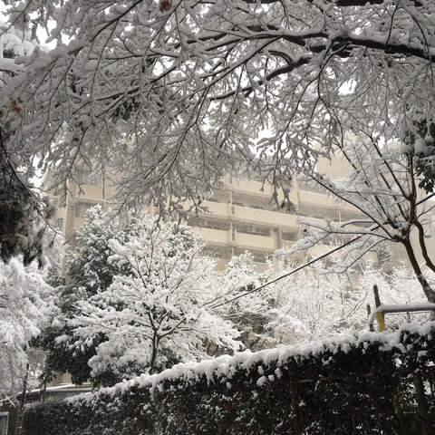 IMG_3696  雪景色南大沢