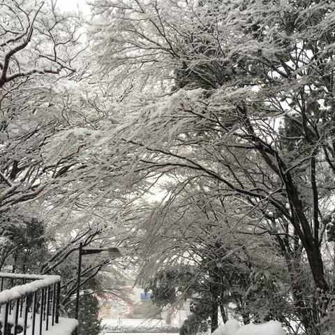 IMG_3670 (002) 雪景色南大沢