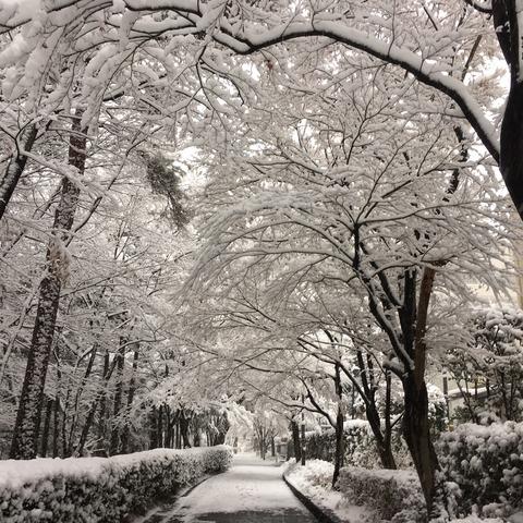 IMG_3681 雪景色南大沢