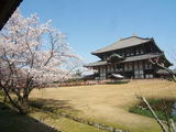 奈良東大寺の春