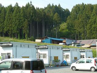 仮設団地裏山の杉林と木材加工場