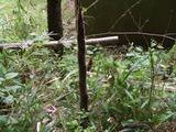 竹の子掘り。その1:探し方