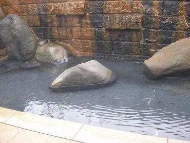 大室温泉3