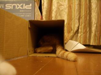 更に入る猫