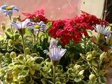 flower