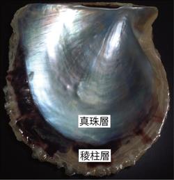 20120216-1-2