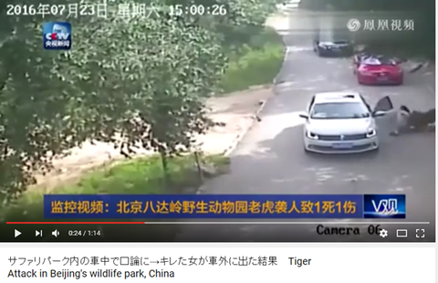 サファリパークで野生のトラに襲われて死亡