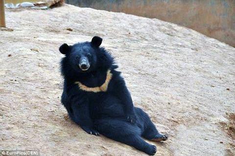【中国】子犬だと思って2年間育てていたら、実はクマだった