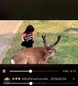 奈良のシカをブチ殴る子供