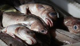 腐敗した魚