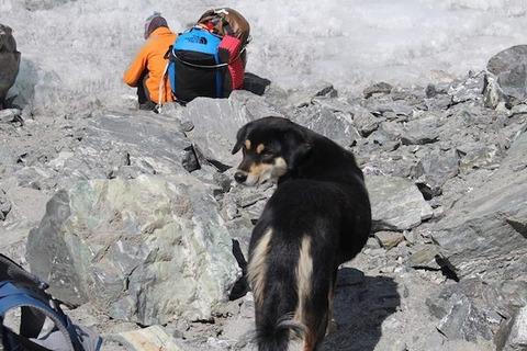 ヒマラヤ登頂犬