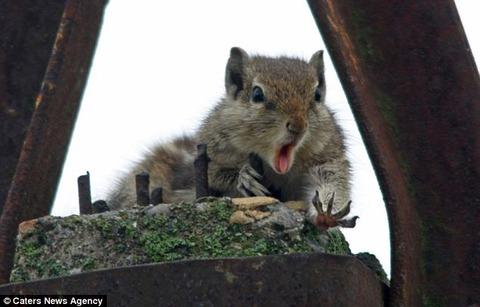 リスがナッツを落とした瞬間の顔2