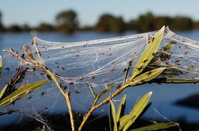 蜘蛛大量発生1