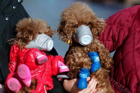 犬にもマスク