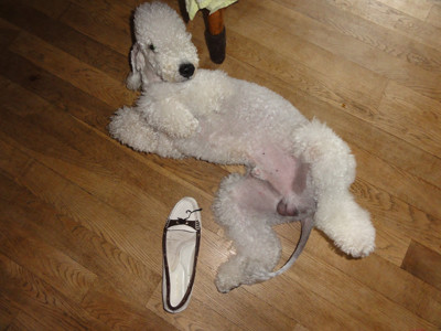 靴をかじったのは誰?