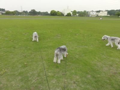 広い芝生グラウンド