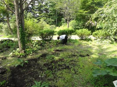 雑草だらけだった庭も・・