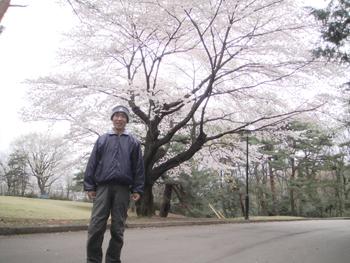 桜満開 名無しさん