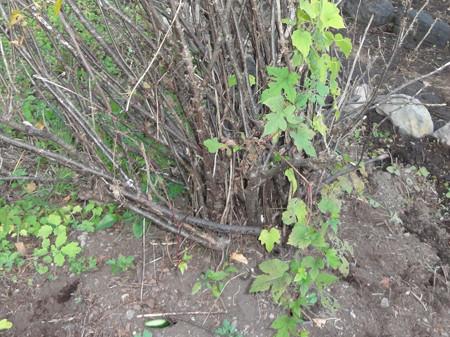 鈴虫の巣穴