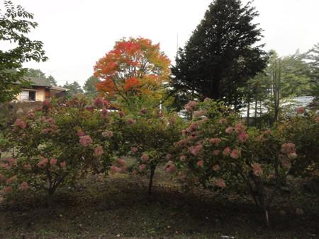 秋は進んで