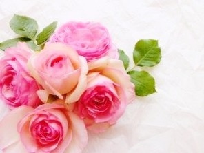 flowergift-rose-300x225[1]