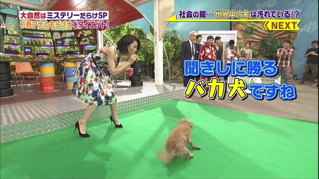 杉野真実 世界まる見え!テレビ特捜部 19