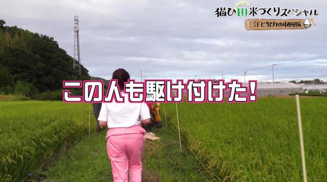 岡村帆奈美 猫ひ田米づくりスペシャル 4