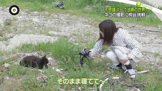 桐谷美玲 NewsZero 9