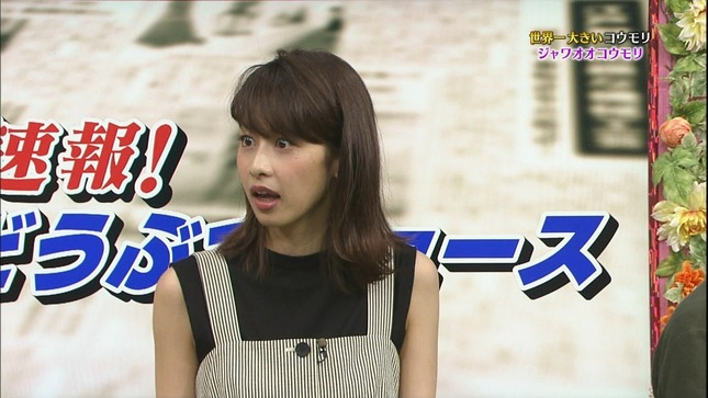 加藤綾子 世界へ発信!SNS英語術 天才!志村どうぶつ園 12