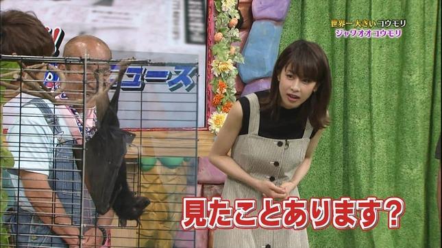 加藤綾子 世界へ発信!SNS英語術 天才!志村どうぶつ園 10