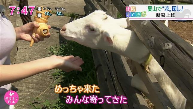 深堀遥菜 おはよう日本 6