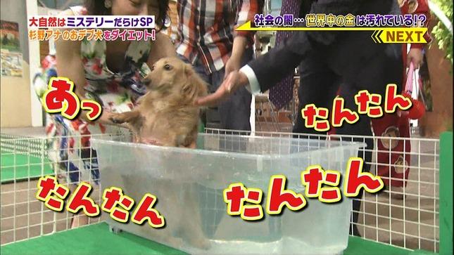 杉野真実 世界まる見え!テレビ特捜部 8