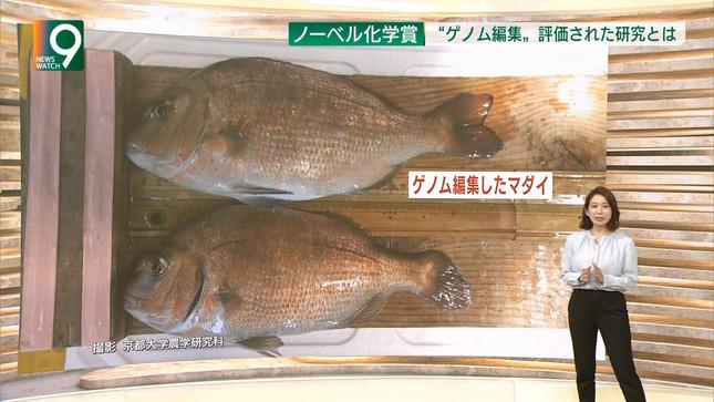 橋詰彩季 列島ニュース おはよう東海  ニュースウオッチ9 7