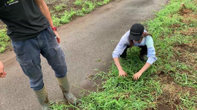 トラウデン直美農業チャンネル 10