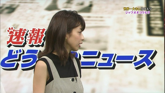加藤綾子 世界へ発信!SNS英語術 天才!志村どうぶつ園 13