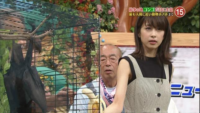 加藤綾子 世界へ発信!SNS英語術 天才!志村どうぶつ園 15