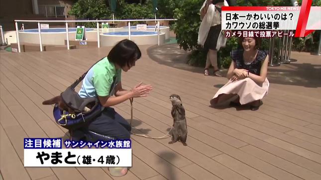 牧野結美 TOKYO MX NEWS 3