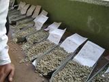 サンプル豆