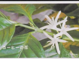 コーヒーのLOOK1-5