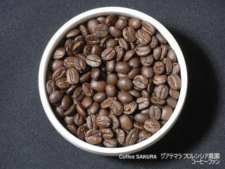 Coffee SAKURA1-9グアテマラフロレンシア農園