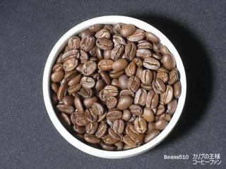Beans510-1-8カリブの王様