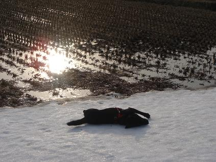 ヒロの雪遊び
