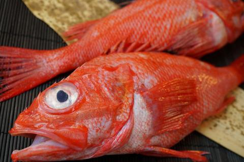 idiotfish