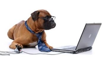 dog-computer11