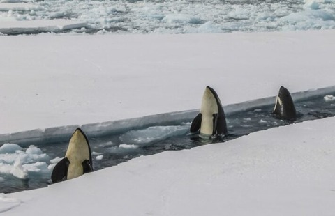 killer-whales-bryan-goff-wT-dwxXCsE8-unsplash-1-710x458