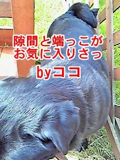 NEC_0413