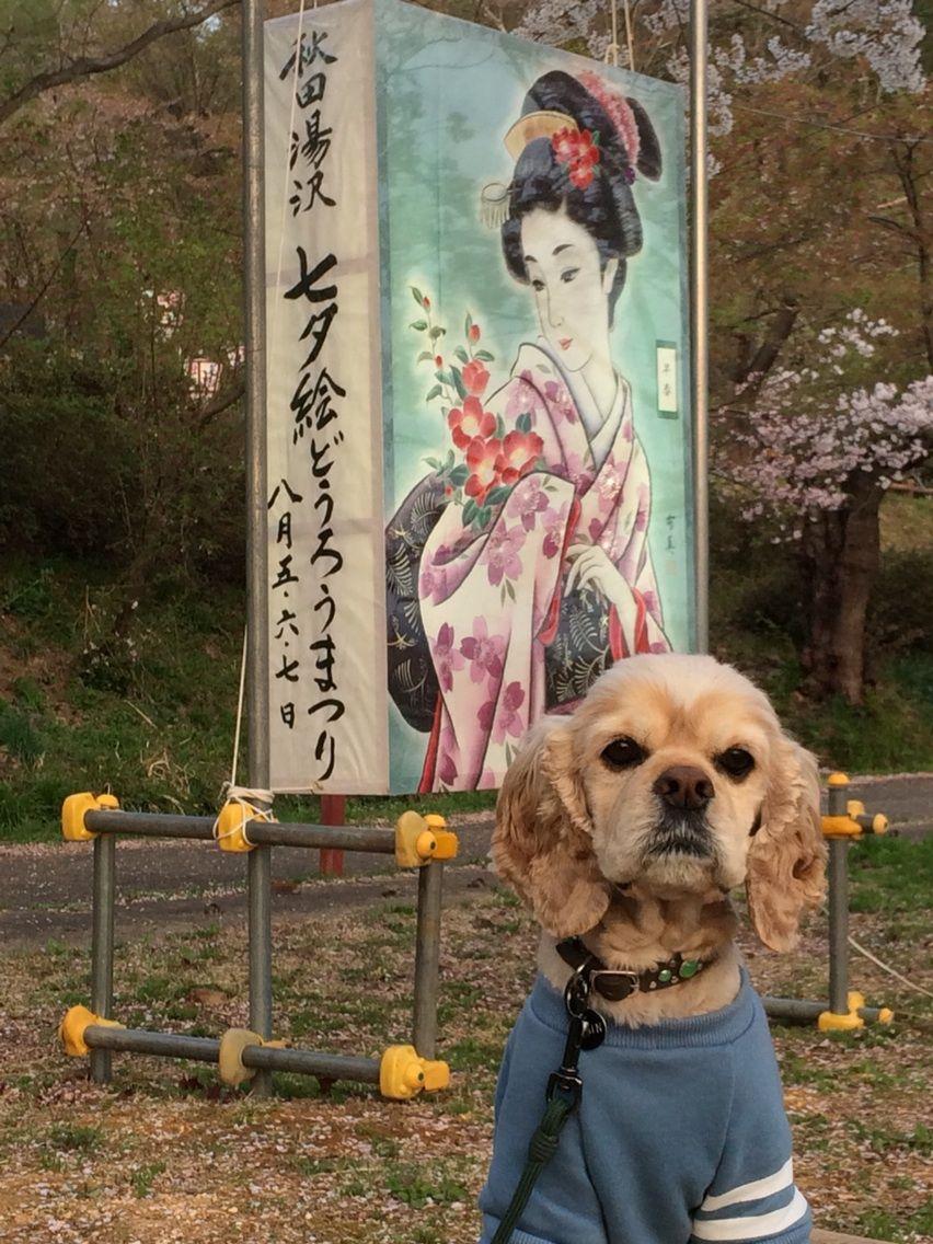 コルチカム's LIFE日記      湯沢市に来たよ。    コメントトラックバック                colchicum_net