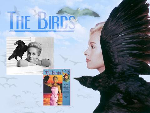birds2_wallpaper1024