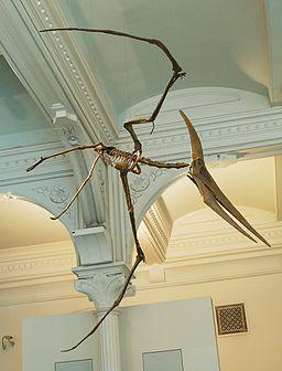 Pteranodon amnh martyniuk